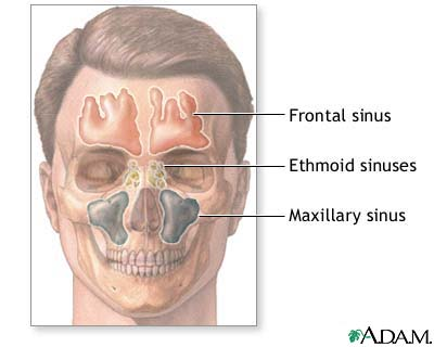 Pediatric Nose & Throat Anatomy | ENT for Children