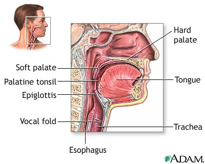 Pediatric Nose Throat Anatomy Ent For Children